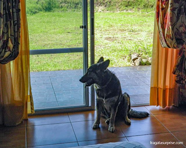 Visitante inesperado no meu quarto no Tupa Hotel de Hanga Roa, Ilha de Páscoa