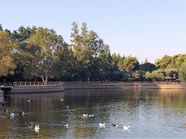 Άμεση λύση στην υδροδότηση του Πάρκου Τρίτση δίνει ο Δήμος Ιλίου