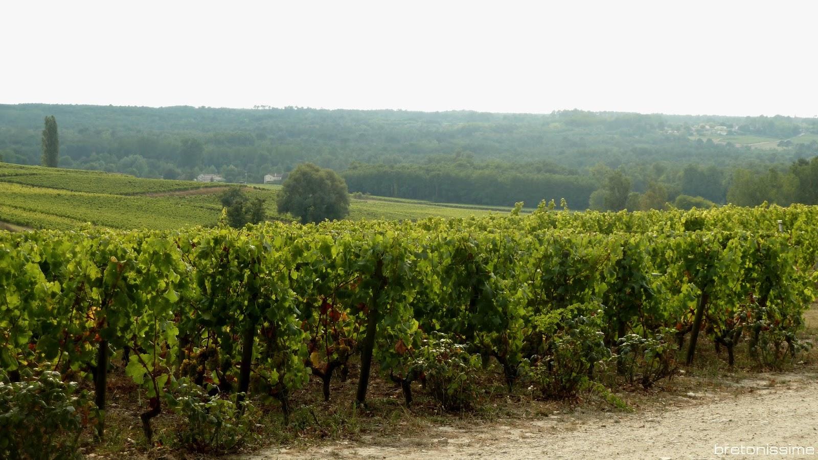 Zwiedzanie Bordeaux: winnice