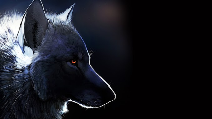 Plano De Fundo Lobo Branco