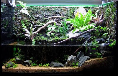 Perbedaan Paludarium, Aquarium dan Kolam Yang Perlu Kalian Ketahui