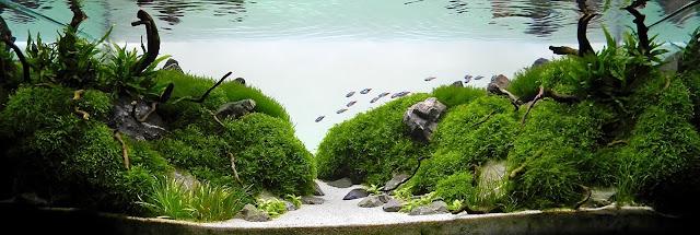 foto aquascape yang unik menarik dan cantik dan menakjubkan