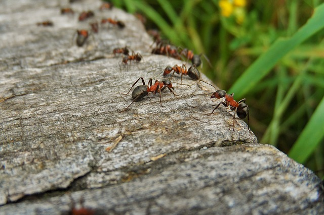 All the Best Ways to Get Rid of Ants in Your House