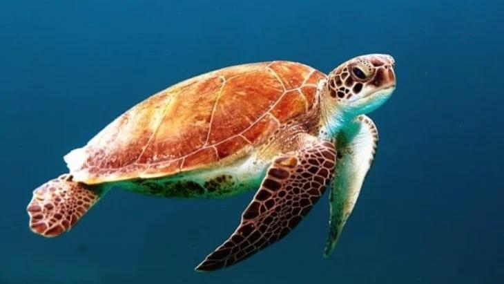 Nacen 97 tortugas en peligro de extinción en una playa desolada y sin nadie que las molest