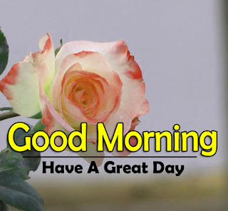 New Good Morning 4k Full HD Images Download For Daily%2B5