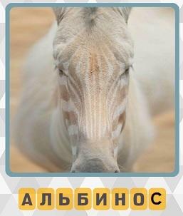 600 слов животное альбинос на 9 уровне