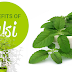 TULSI JUICE REMOVES STRESS AND DEPRESSION | TULSI PLANT