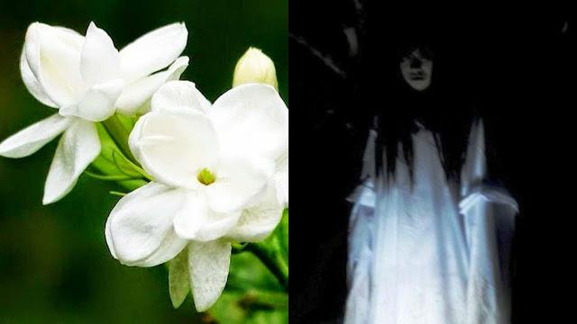 Bau wangi-wangian bunga melati
