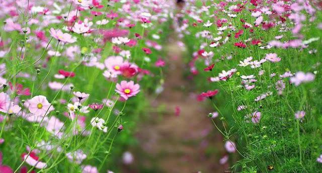 hình ảnh hoa đẹp nhất thế giới 1