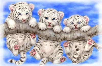 Tre cuccioli di tigre albina