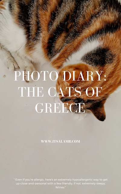 Photo Diary: The Cats of Greece | Itsalamb.com