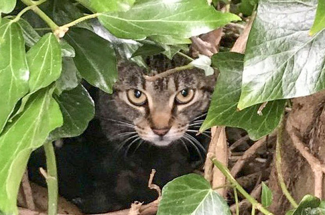 Can house cats adapt to going outside?