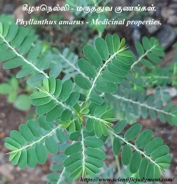 கீழாநெல்லி - மருத்துவ குணங்கள் - Phyllanthus amarus - Medicinal properties.