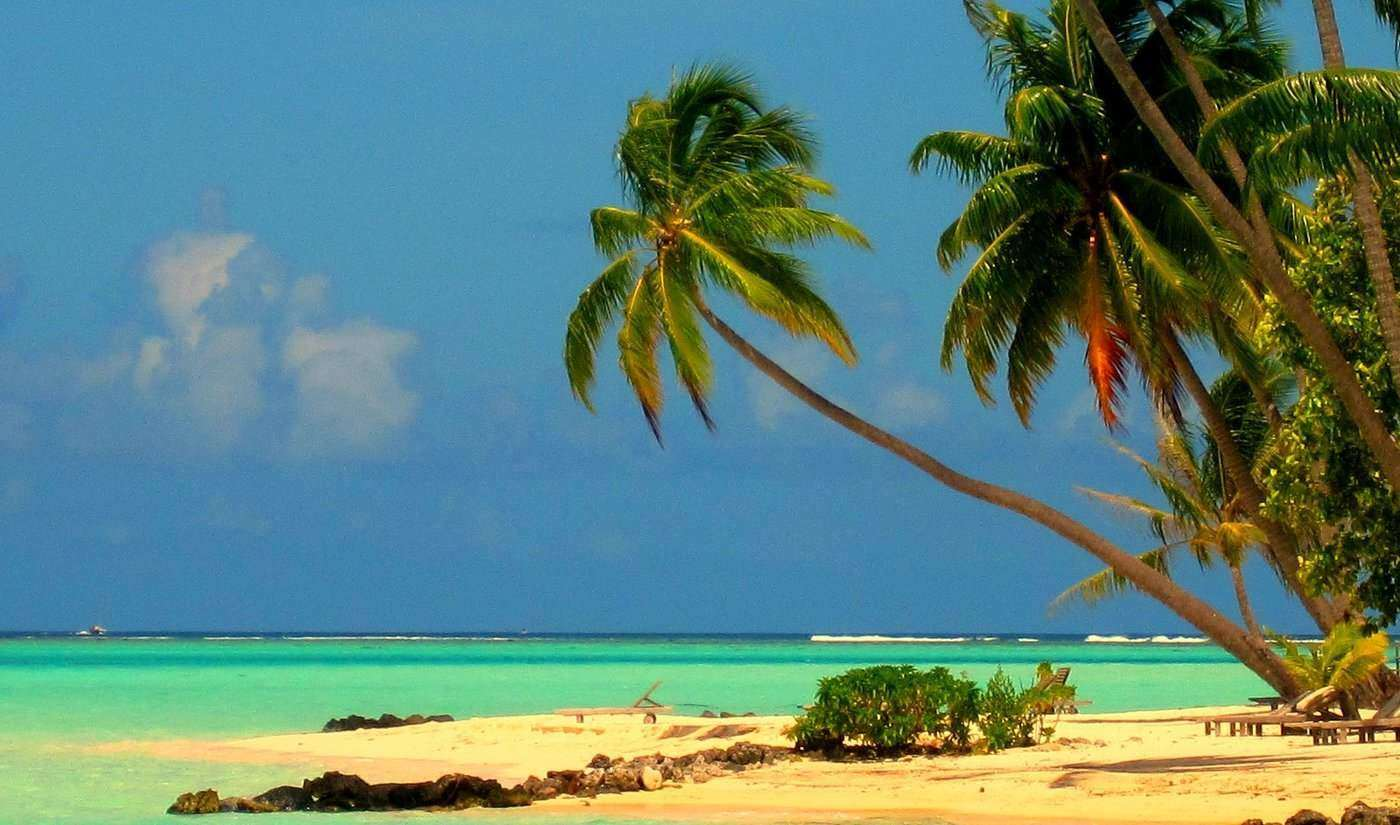 palm trees on bora bora - 20 best things to see and do around the world