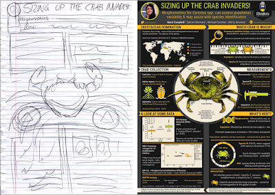 "Left: Pencil sketch of poster. Right: Comompleted poster titled ""Sizing up crab invaders""."