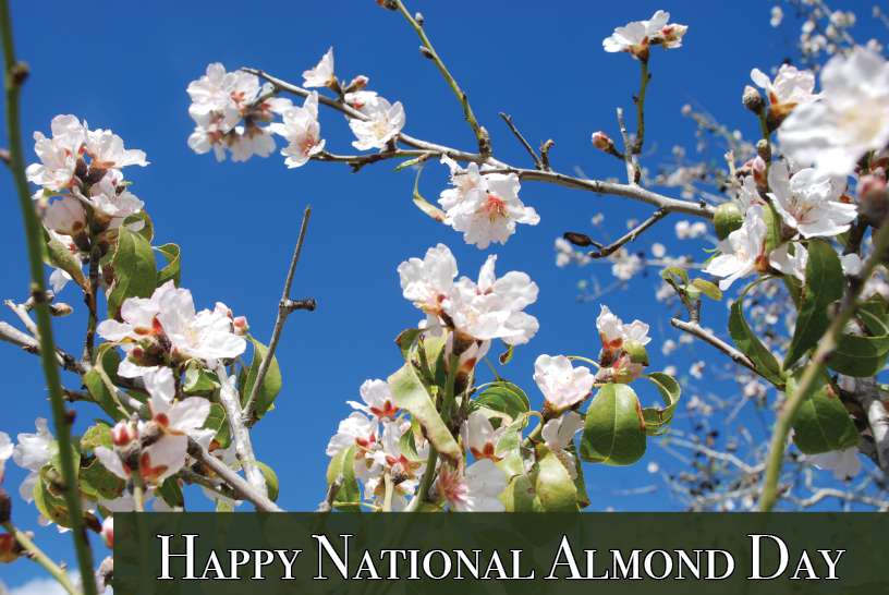 National Almond Day Wishes Pics