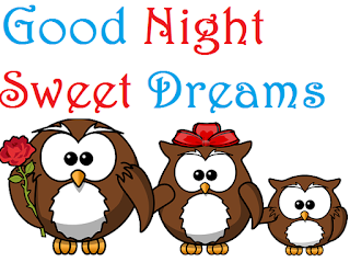 good night little bird