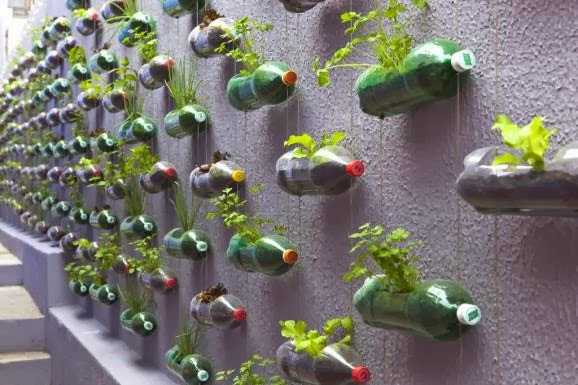 Garden Design Ideas: Wall Garden