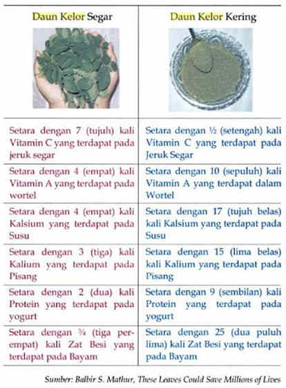 Manfaat kandungan daun kelor untuk kesehatan