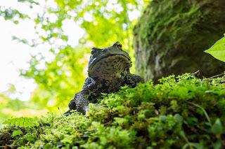 夏の特別展「里の生き物と日本のカエル」