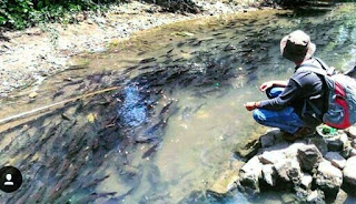 ikan di desa rianiate