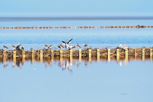 Watvögel im Wattenmeer vor Keitum