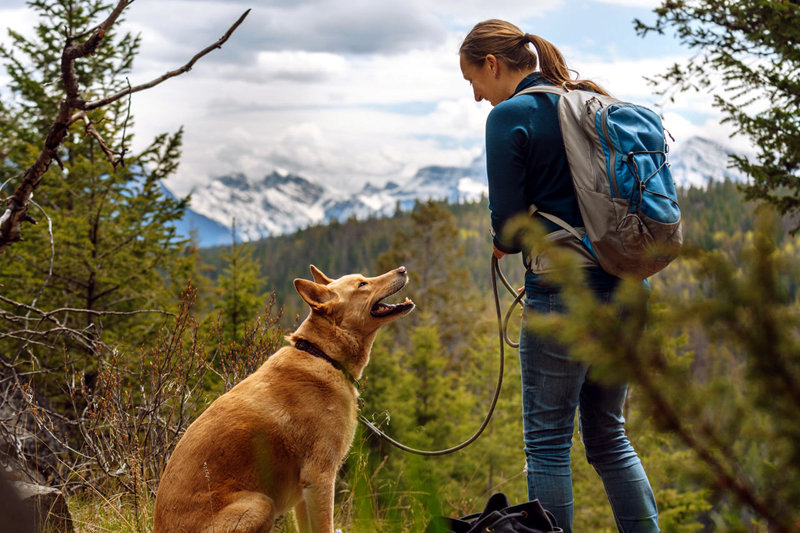 Five Tips for Safely Hiking with Your Dog