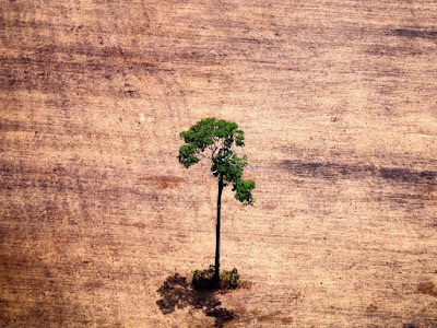 SAD BUT TRUE: THE NUMBER OF TREES LOST IN 2018 COULD COVER BELGIUM