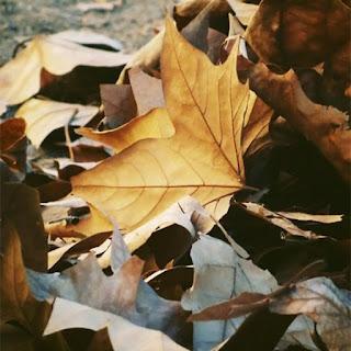 Fall_inspiration