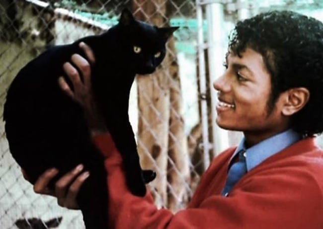 Michael Jackson and a cat