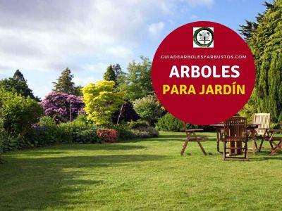Árboles para Jardín son una de las principales y más importantes decisiones a tomar cuando Diseñamos un Jardín