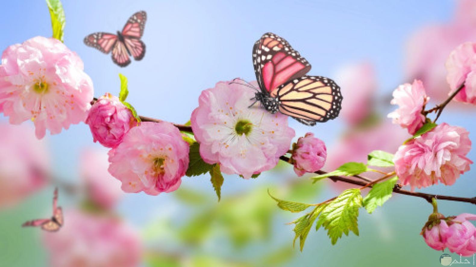 صور الربيع - اجمل الصور و الخلفيات عن فصل الربيع 2021