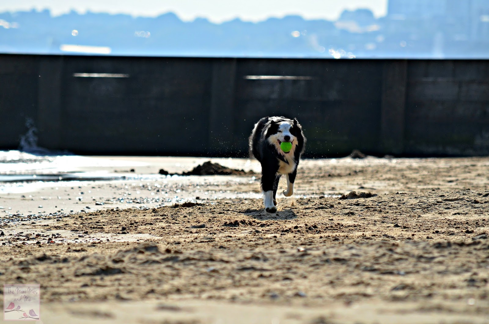 The Mini Mes and Me Family Lifestyle Blog Border Collie on the Beach at Bournemouth