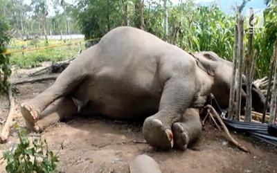 Terancam Punah, Pemburu Bunuh 90 Ekor Gajah di Botswana