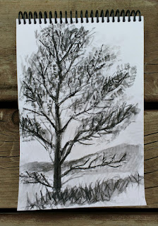 three trees charcoal on paper