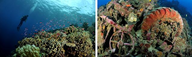 Keindahan Keragaman Jenis Biota Panorama Bawah Laut Pantai Nunuhu Morotai
