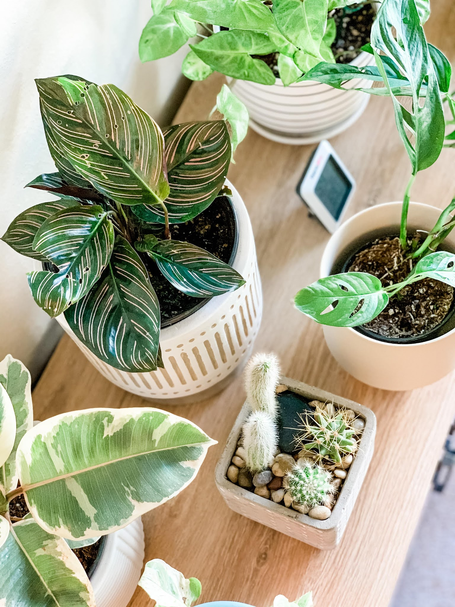 Assorted indoor houseplants on a table seen from above