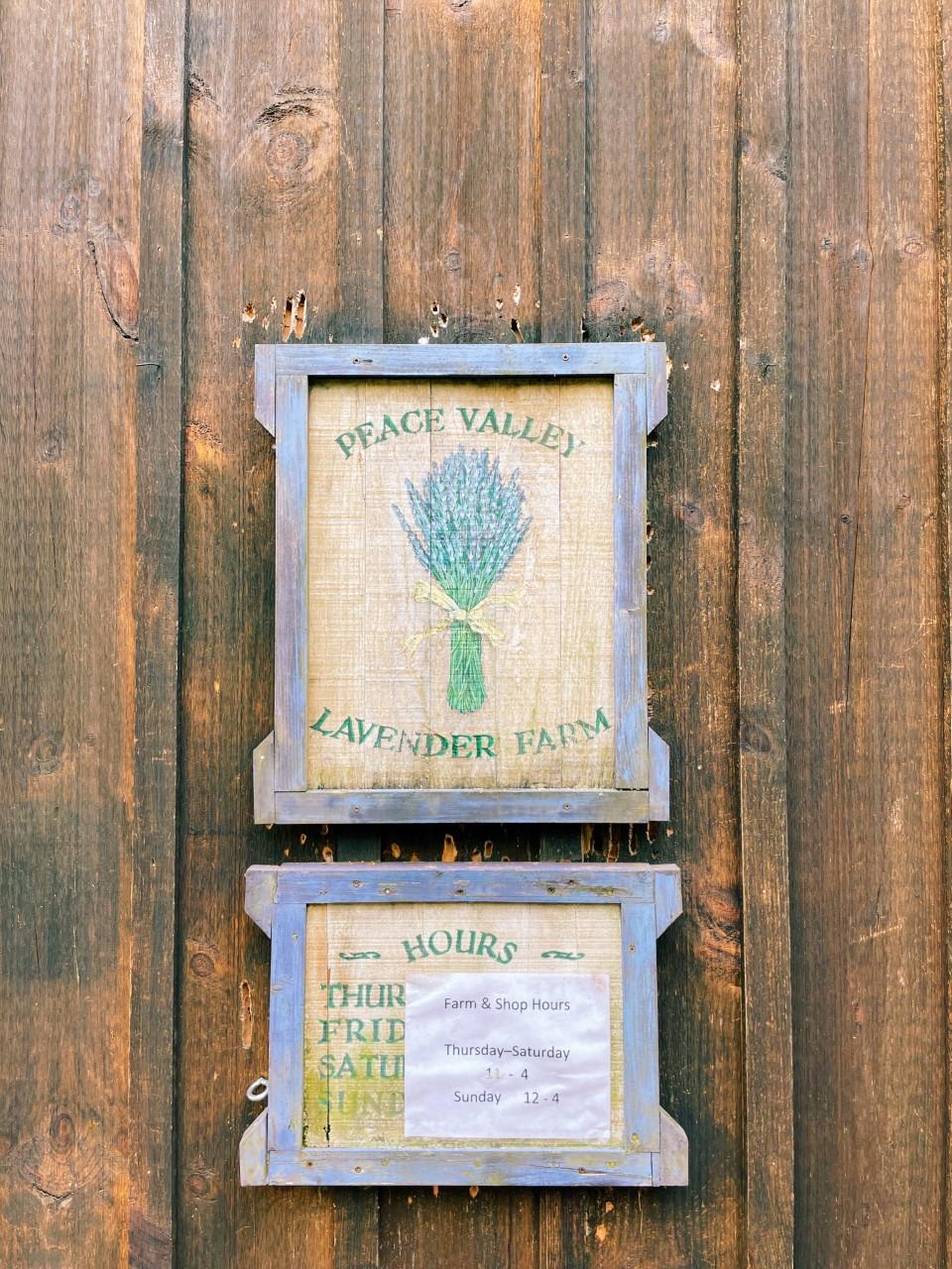 Peace Valley Lavender Farm in Doylestown, PA   Organized Mess