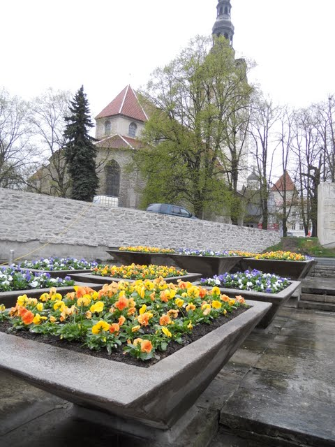 Flowers on a rainy day in Tallinn, Estonia