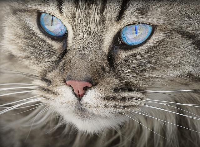 बिल्लियों के बारे में 10 रोचक बाते ?