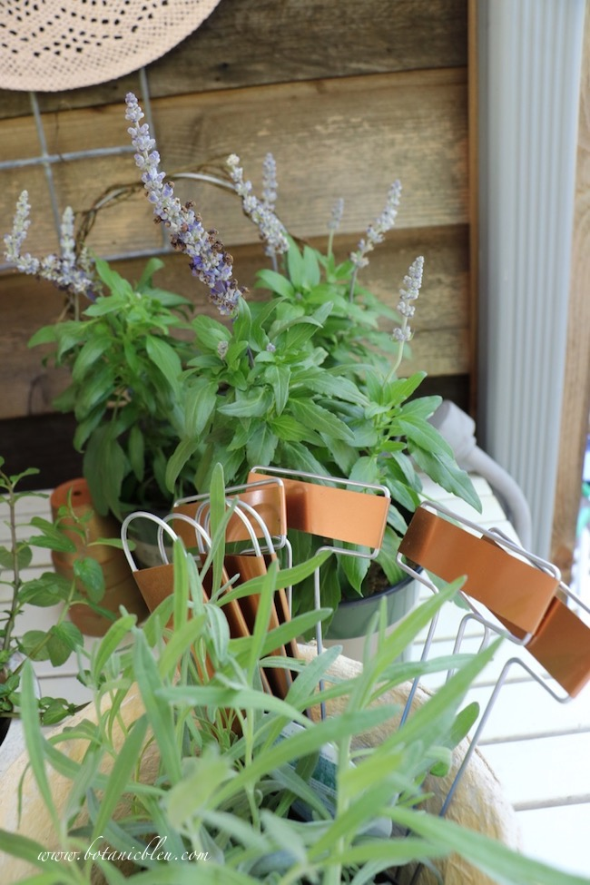 spring tour of gardener's potting bench plants