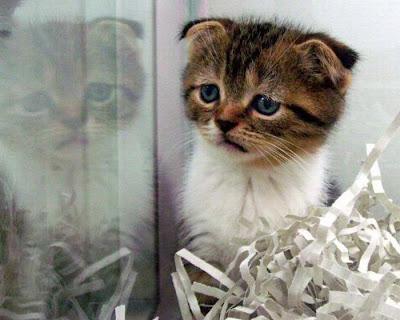 imagenes tiernas gatos