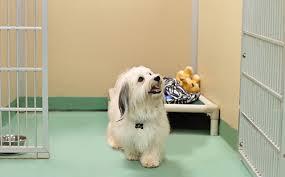 cães em hospitais