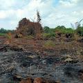 Sumber Api Karhutla di Perbatasan Kecamatan Gaung dan GAS Berawal Dari Kebun PT CPK