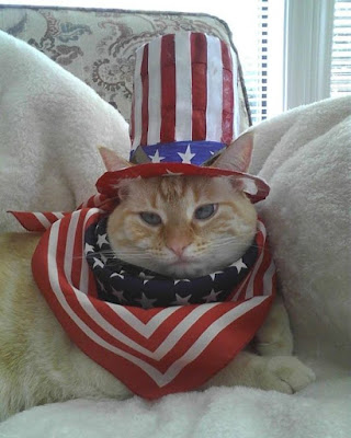 http://fortheloveofcatsfl.com/how-to-keep-kitty-safe-on-july-4th/