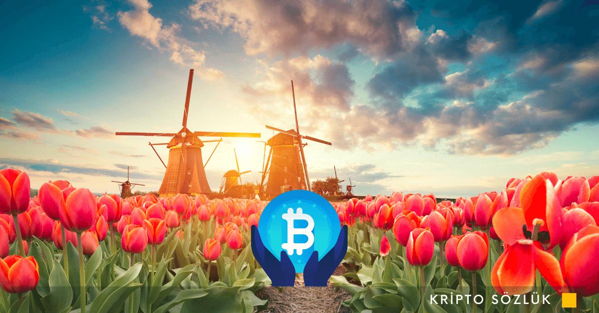 Kripto Para Hollanda'da Daha Katı Yasalarla Karşılaşacak!