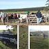 Polícia Civil recupera 41 cabeças de gado