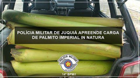 POLÍCIA MILITAR DE JUQUIÁ PRENDE LADRÃO DE PALMITO DE PALMEIRA IMPERIAL