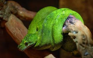 साँप की जानकारी हिंदी में ▷ some facts about snake in hindi