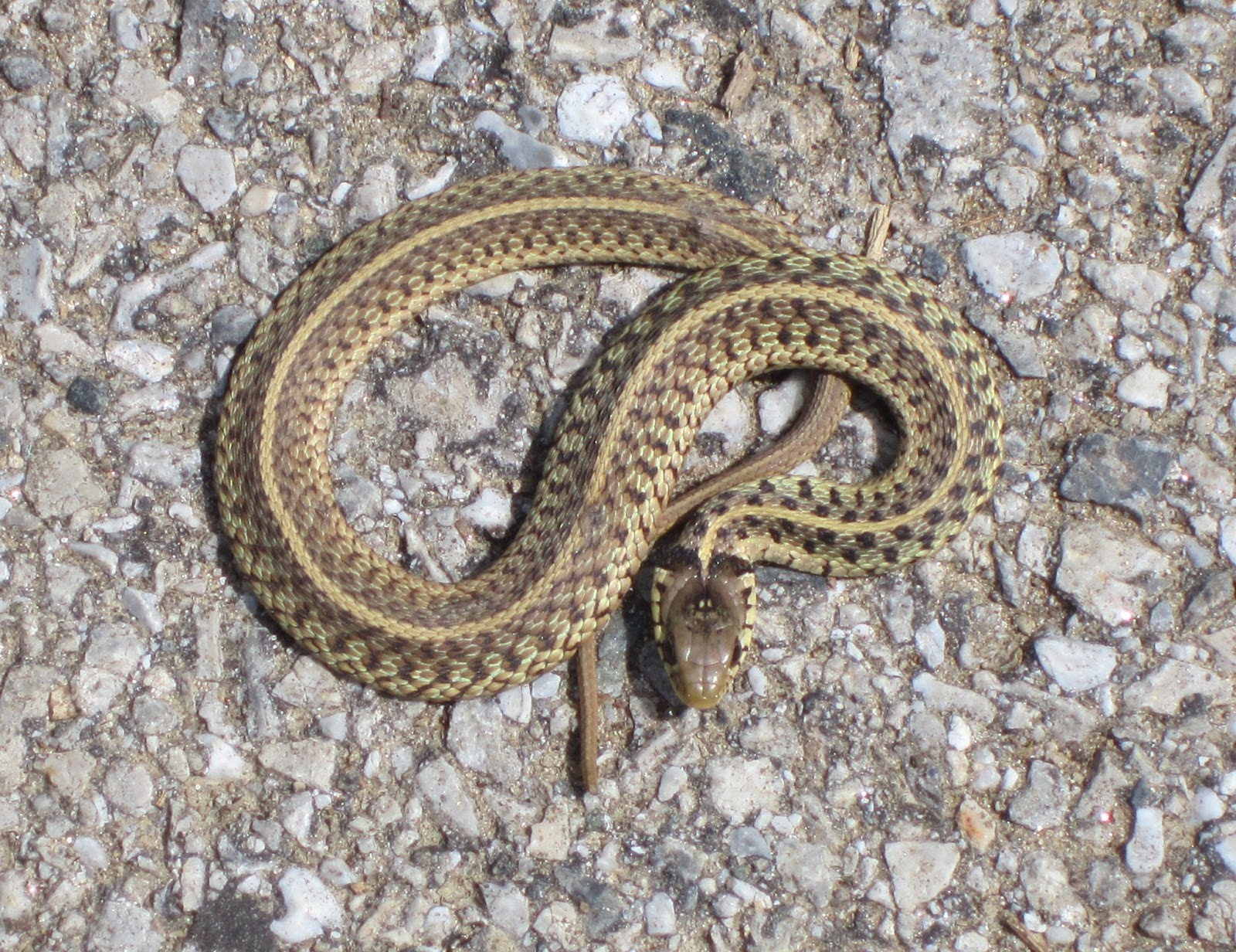 Name that snake! And keep your dog safe - Columbia Dogs-on-the-Go